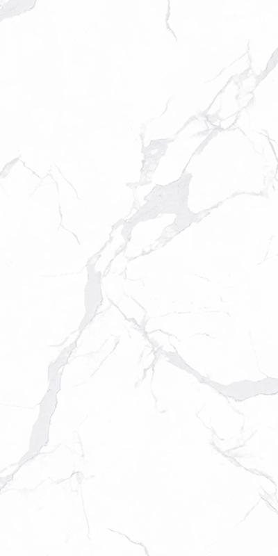 SDG7615218A-意大利鱼肚白